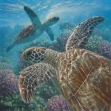Sea Turtles - Turtle Bay - Square Art Print