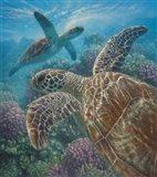 Sea Turtles - Turtle Bay Art Print