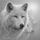 Arctic Wolves - Whiteout - B&W Art Print