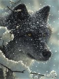 Black Wolf - Black in White Art Print