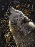 Howling Wolf - Songs of Autumn Art Print