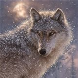 Lone Wolf - Square Art Print