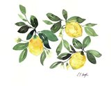Lemons and Leaves Art Print