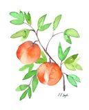 Two Watercolor Peaches Art Print
