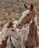 Gypsy & Sentinel - S Steens Wild Mustangs Art Print