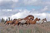 South Steens Mustangs Art Print
