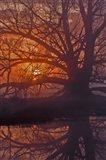 Foggy Sunrise Art Print