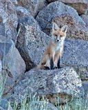 Red Fox Kit II Art Print