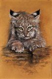 Bobcat Art Print