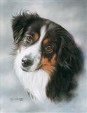 Australian Shepherd Art Print