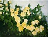 Yellow Rose Bush Art Print