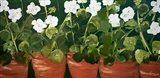 Pots of Geraniums Art Print