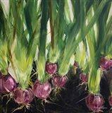 Red Onions Art Print