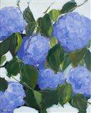 Violet Hydrangeas Art Print