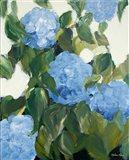 Blue Hydrangeas IV Art Print