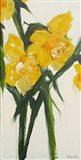 Daffodil I Art Print
