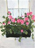 Window Box III Art Print