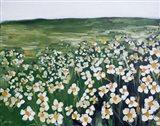 Chamomile Field Art Print