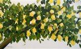 Dana's Lemon Tree Art Print