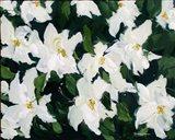 White Poinsettias Art Print