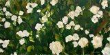 White Rose Bush Art Print
