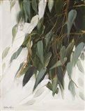 Willow Eucalyptus Art Print