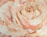 Peach Garden Rose Art Print