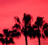 Neon Palm Trees III Art Print