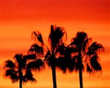 Neon Palm Trees IV Art Print