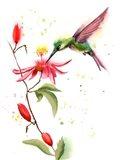 Humming Bird II Art Print