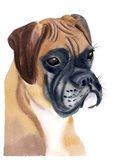 Boxer Babe Art Print