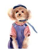 Dog Wearing Clothes II Art Print