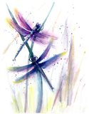 Dragonflies II Art Print