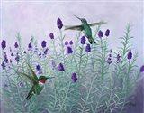 Humming Lavender Art Print