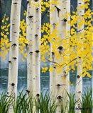 Yellow Aspen Leaves Art Print