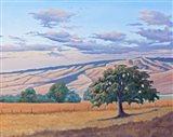 Summer Sunset on the Blue Mountains Art Print