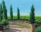 VaPiano Vineyard Art Print