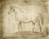 Horse Anatomy 101 Art Print