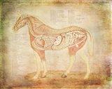 Horse Anatomy 201 Art Print