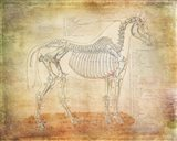 Horse Anatomy 301 Art Print