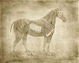 Horse Anatomy 401 Art Print