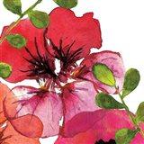 Vibrant Floral III Art Print
