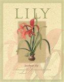 Jacobean Lily Art Print