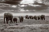 Amboseli elephants Art Print
