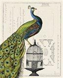 Peacock Birdcage I Art Print