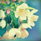 Natures Apple Blossom Art Print