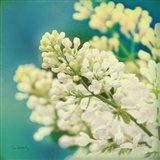 Natures Lilac Blossom Art Print
