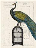 Peacock Birdcage II Art Print