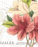 Azalee Jardin I Art Print