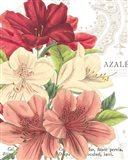 Azalee Jardin II Art Print